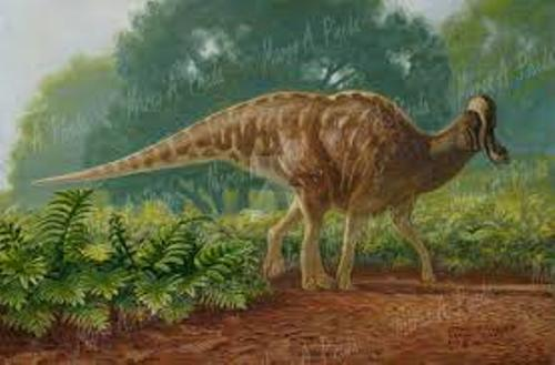 Fotos de Corythosaurus